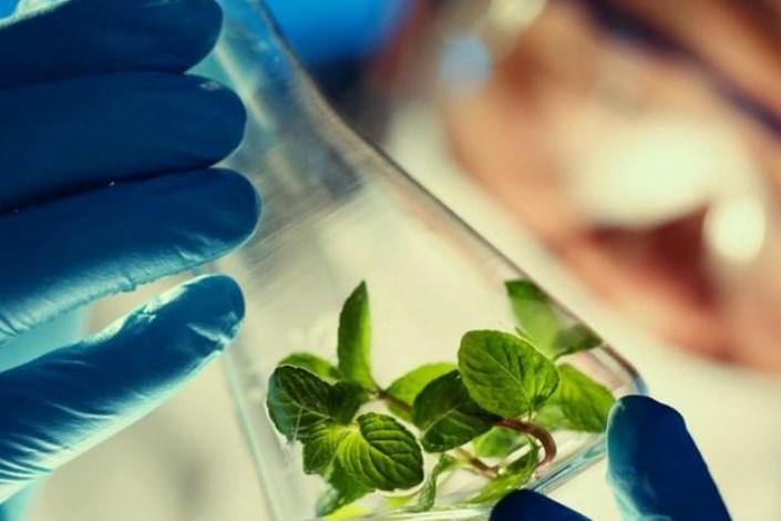 رویداد فرصتهای همکاری  زیستفناوری پزشکی برگزار میشود