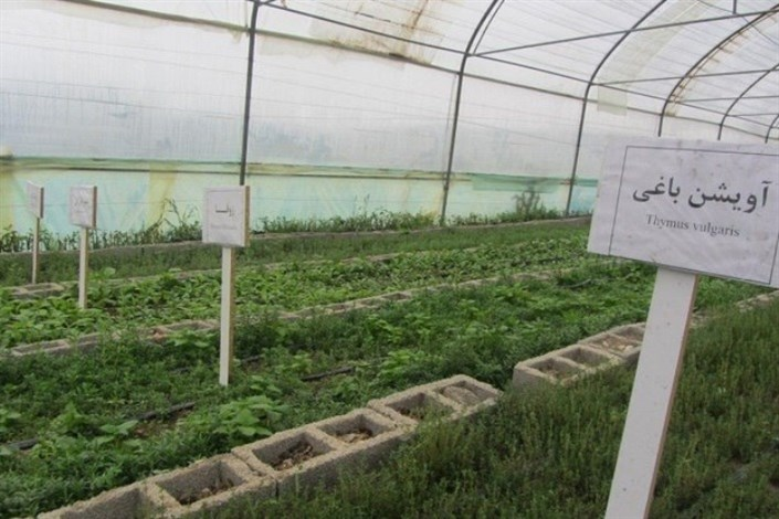 تولید گیاهان دارویی در واحد ایلام/ ایجاد مرکز تحقیقاتی در شهرک صنعتی استان