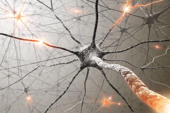 راهی برای حل معمای قشر خاکستری مغز