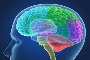 تعیین ارتباط میان اتصالات مغزی با تغییرات بین گروهی افراد مختلف