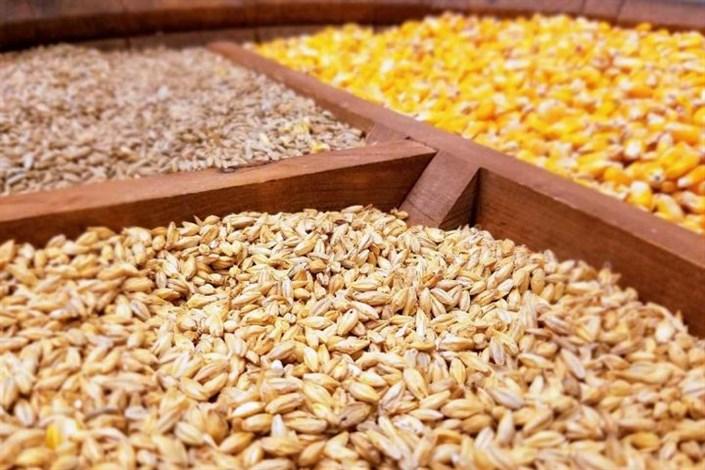 محصولات قاچاق و غیرمجوزدار خوراک دام، رمق و توان تولیدکنندگان را گرفته است