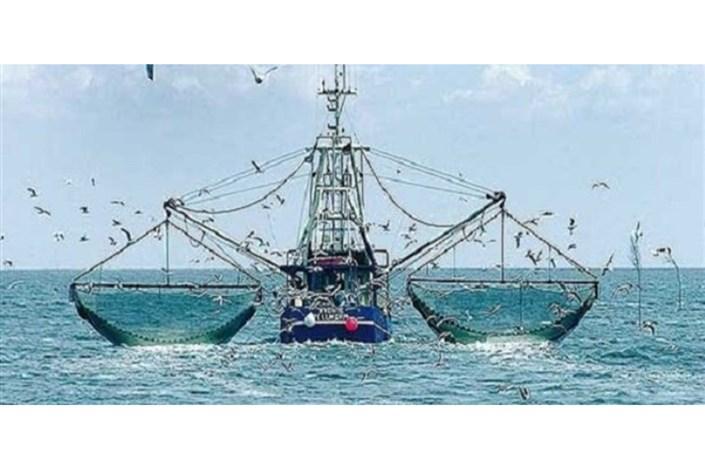 همه نوع صید ترال به مدت دو سال ممنوع میشود