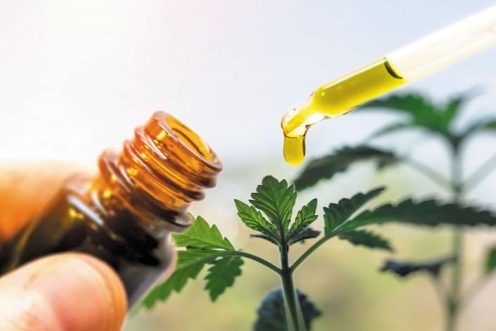 هزار شرکت فناور در زنجیره ارزش صنعت گیاهان دارویی فعال هستند