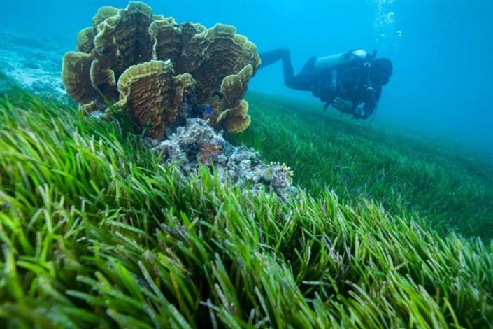 وجود ویروس در شایعترین باکتری اقیانوسها