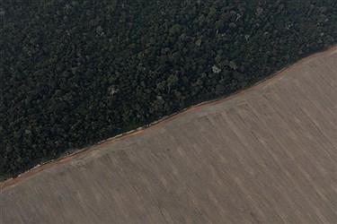 ۳۵ میلیون اصله نهال برای اجرای طرح ملی توسعه زراعت چوب نیاز است