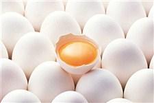 بررسی چالش های 60 ساله صنعت مرغ و تخم مرغ