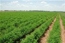 یک مقام مسئول مطرح کرد: قاچاق خاک کشاورزی به کشورهای حوزه خلیج فارس