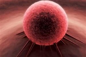 نابود کردن سلول های سرطانی با نارنجک میکروسکوپی