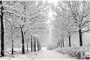 مدیرعامل شرکت ملی  پالایش و پخش: آماده ورود به فصل سرما هستیم