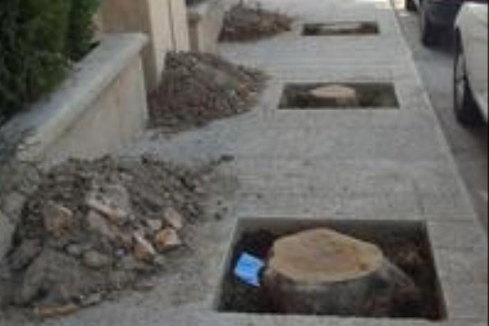 قطع درختان