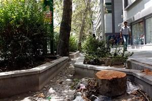 فقط درختان سالم میتوانند زمین را نجات دهند