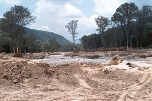 در هر دقیقه ۲۱ هزار مترمربع از جنگلهای کشور از بین میرود/500 هزار درخت هم کاشته نشده است