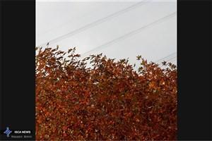 جمعنشدن برگهای پاییزی از ١۵ بوستان شهر