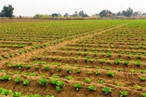 زمینه فعالیت 2000 کارشناس عضو سازمان نظام مهندسی کشاورزی فراهم است