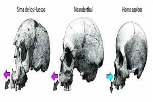 بررسی روند تغییر چهره در نئاندرتالها و انسانهای مدرن