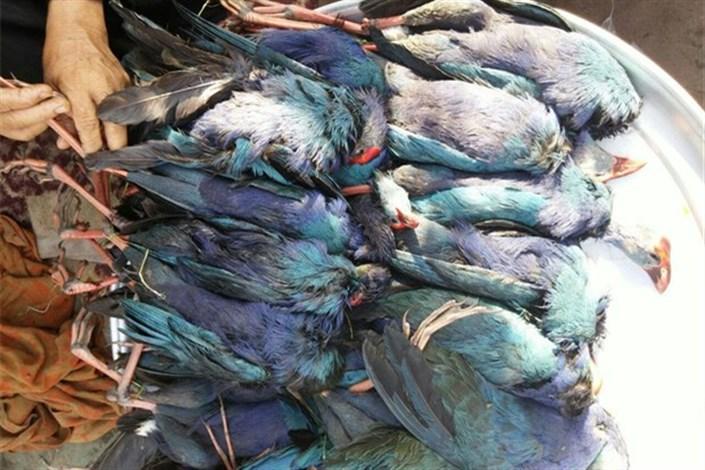 شکار پرندگان