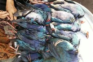 مجوز شکار پرندگان مهاجر برای 20 استان صادر شد