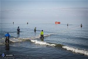 تکذیب آلودگی ماهیان خزر/سلامت آبزیان دریای خزر در اروپا تائید شد