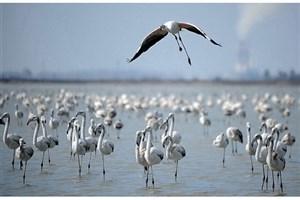 وجود آنفولانزای پرندگان در فریدون کنار و میانکاله