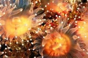 کشف موجودات درخشان جدید در دریای سرخ