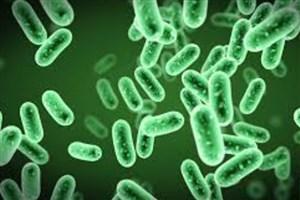 شناسایی دو نوع باکتری دهانی/ بروز سرطان لوزالمعده