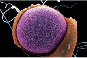 کشت سلول های بنیادی پانکراس جنین توسط محقق ایرانی