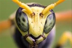 تصویر سه بعدی از مغز زنبور !