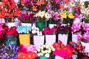 """کاهش عرضه گل """"سنبل""""/ افزایش قیمت در آستانه نوروز"""