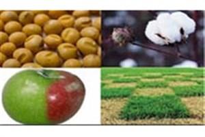 محصولات کشاورزی تراریخته در کشور تولید نمی شود/ تولید و واردات محصولات تراریخته جرم است