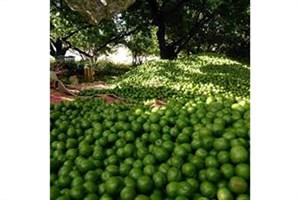 هشدار در مورد خرید چاقاله بادام و گوجه سبز از دستفروشان