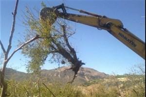 قطع صدها درخت بلوط لرستان بر اثر اجرای یک طرح