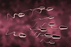 تبدیل  سلولهای پوست به اسپرم برای درمان ناباروری