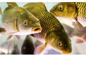 درمان نابینایی با ماده شیمیایی مغز ماهی