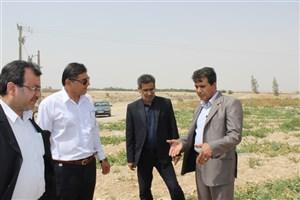 رئیس دانشگاه آزاد اسلامی واحد خورموج خبر داد: احداث گلخانه واحد خورموج در انتظار تصویب هیات امنا