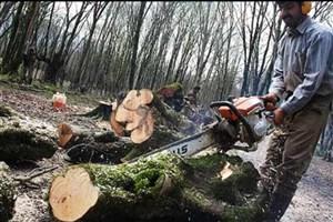 حکم حبس تعزیری ۶ ماه تا ۳ سال ، مجازات قطع بیش از ۳۰  اصله درخت
