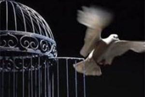 آزادی ۱۱۰ هزار زندانی ارمغان ستاد دیه به خانواده محکومان غیرعمد