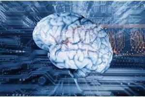 100 قسمت ناشناخته و جدید در مغز انسان کشف شد