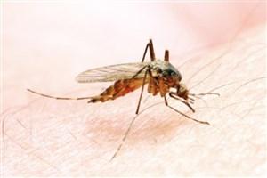 وضعیت بیماری مالاریا در ایران و راه های مقابله با آن