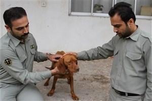 مجازات عامل آزار و اذیت سگ در کلاله