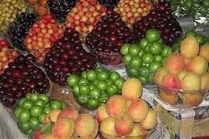 گرانی برخی از انواع سبزیجات/  اعلام نرخ گیلاس و زردآلو