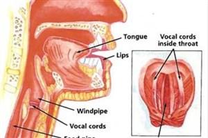تشخیص بیماری از روی صدا