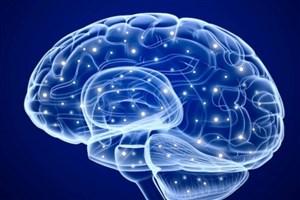 مهمترین نشانههای ضربه مغزی چیست؟/ ۷ نشانه جدی که هرگز نباید فراموش کنید