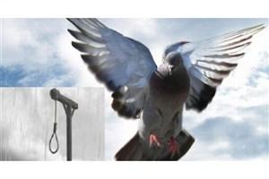 ۲ فقره قصاص نفس در مازندران منجر به صلح و سازش شد