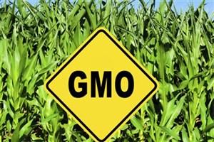 عوارض قطعی و احتمالی مصرف محصولات دستکاری شده ژنتیکی
