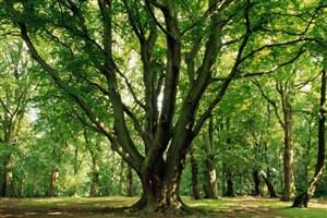 تذکر نمایندگان به رئیس جمهور درمورد قلع و قم درختان جنگلهای زاگرس
