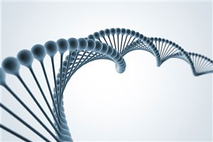 Building a Human Genome from Scratch
