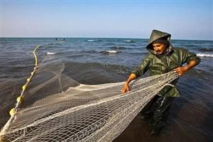"""چرا وزارت نیرو وسازمان محیط زیست با پرورش ماهی """"تیلاپیا""""در آب های داخلی مخالفند؟"""
