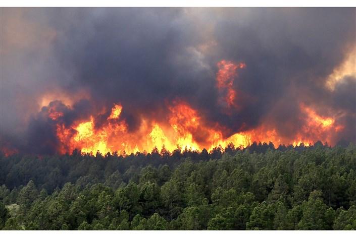 یک چوپان عامل آتش سوزی جنگل های پاسارگاد