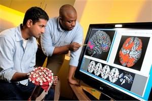 رئیس انجمن علوم اعصاب خبر داد؛ تعریف دوره مشترک رشته علوم اعصاب با دانشگاه های خارجی