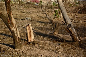 حکایت« باغ سیب» مهرشهر
